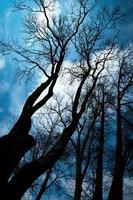 Silhouettes of trees photo