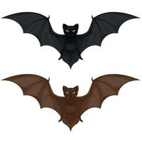 Vector design of two flying mammals, bat in two colors. All on white background.