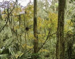 A forest of Florida photo