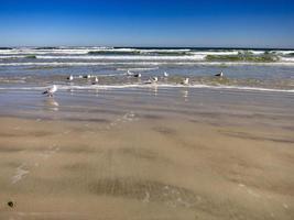 Seagulls on the seashore photo