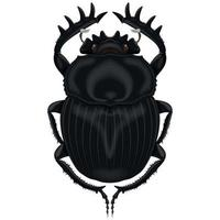 Ilustración de insecto, escarabajo pelotero vector