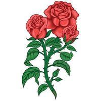 diseño vectorial de un ramo de rosas, con hojas, tallo y espinas vector