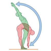 Illustration of human body in exercise pose, person doing physical exercise, person in good physical condition vector