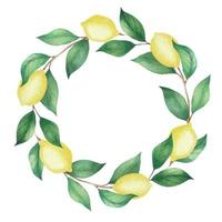 Watercolor wreath of lemons and green branches, leaves vector