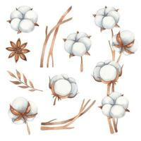 Watercolor set of floral elements from cotton flowers, anise and cotton twigs in brown shades