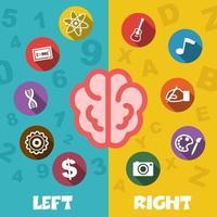 cerebro izquierdo y derecho vector
