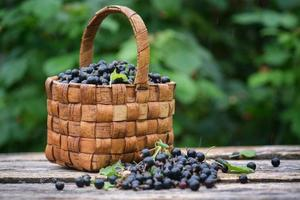 Freshly picked black currant berries in vintage wicker basket on old wooden boards photo