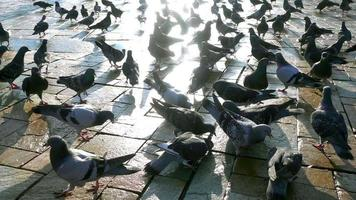 Pigeons on Ground and Sun Light