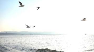 gaivotas voando no mar