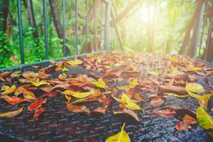 Autumn and green leaves on old rusted steel wet walkway outdoors