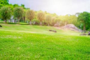 Focused green grass in golf court garden
