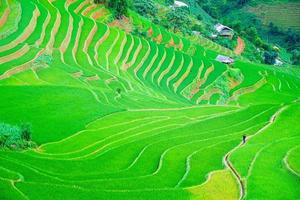 A man walking in the center of a beautiful terraced rice paddy field