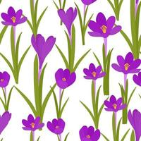 Seamless background with crocuses. A repeating pattern with purple flowers. Solid colored background. For packaging design, vector. vector