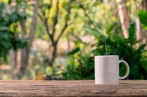 plantar árboles en macetas, plantas de amor y el concepto de medio ambiente foto