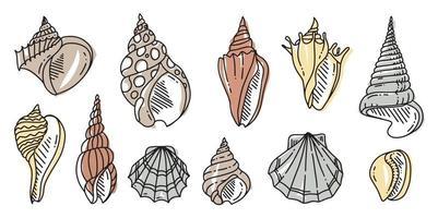 colorido conjunto de doodle de concha de mar. varias conchas de mar en contorno. dibujado a mano ilustración plana. vector