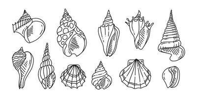 Doodle conjunto de concha de mar. varias conchas de mar en contorno. dibujado a mano. vector