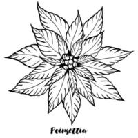 Merry Christmas greeting card. Poinsettia in doodle line style on white background. vector