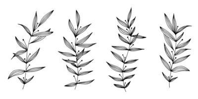 vector dibujado a mano conjunto de varias ramas de silueta con hojas sobre fondo blanco. diseño de elementos para tela, papel de regalo y web.