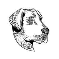 Anatolian shepherd dog vector