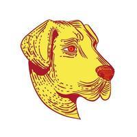 Color de grabado de cabeza de perro pastor de Anatolia vector