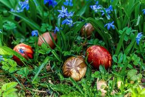 Multi-colored Easter eggs in green grass photo