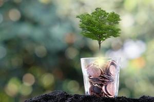 árbol que crece de un árbol, concepto de crecimiento empresarial foto