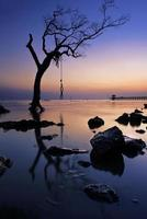 Silhouette of a tree on the beach photo