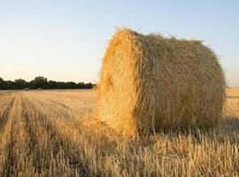 A bale of wheat straw on a farm field photo