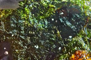 Fondo de textura de nori de algas crujientes foto