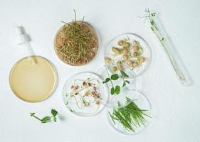 Cosmetic skincare background of Petri dishes and cosmetic tubes with herbal medicine with sprouted seeds of peas, lentils, and wheat grains photo