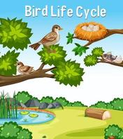 Bird Life Cycle font in outdoor nature scene