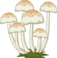 Many mushrooms in cartoon style on white background vector
