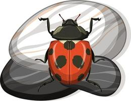 Top view of ladybug on a stone on white background vector