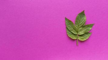 Green leaf on a pink background, simple flat lay with pastel texture photo