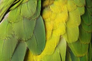Colorful green bird feathers photo