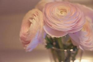 Pink Ranunculus flowers close up in a vase with a blurred background