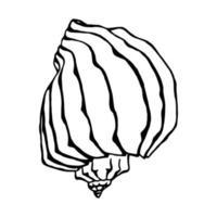 Seashells.  Hand drawn vector illustration in sketch style.