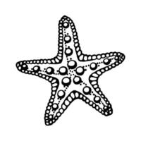 Starfishes. Hand drawn vector illustration in sketch style.