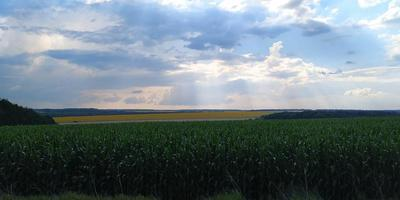 Corn field with clouds photo