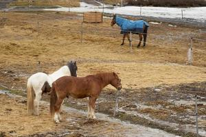 Horses on a farm in an outdoor enclosure in the springtime photo