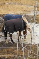Horses on a farm in an outdoor enclosure in the springtime