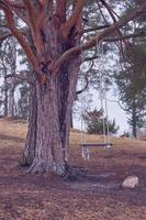 Wooden swing on a tree branch in the springtime photo