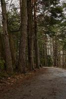 A road in a forest on a cloudy day during the springtime photo