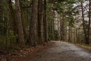 Una carretera en un bosque en un día nublado durante la primavera. foto