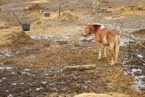 A horse on a farm in an outdoor enclosure