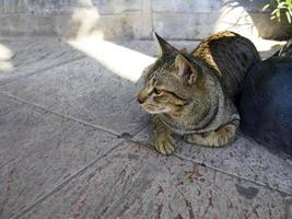 The cat is lying on concrete outside
