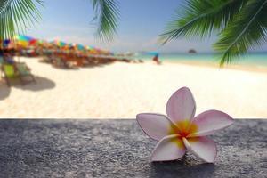 flores de plumeria con fondo de playa tropical foto
