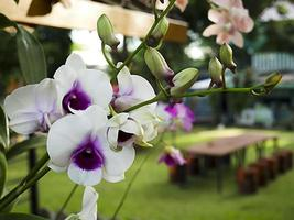 White orchid flower on a green background in the garden photo