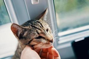 hombre acariciando un gato atigrado foto