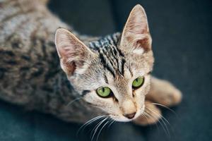 vista superior de un gatito rayado foto